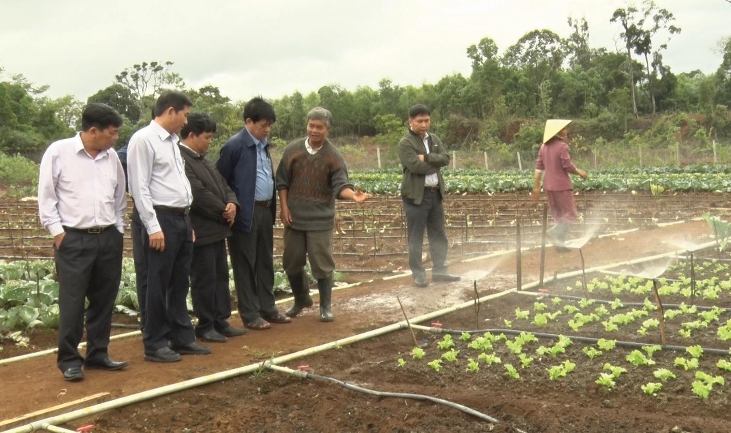 Ông Trần Châu, Phó Chủ tịch UBND tỉnh Bình Định (thứ 2 từ trái sang) thăm mô hình rau sạch trong vùng đồng bào DTTS tại xã Vĩnh Sơn, huyện Vĩnh Thạnh.