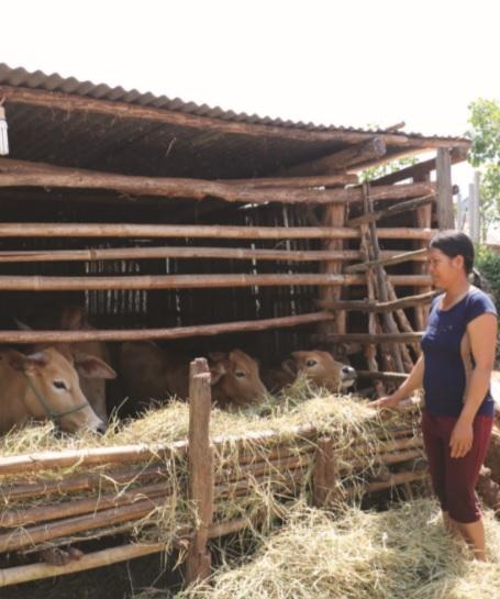 Người dân xã A Dơk nuôi bò để phát triển kinh tế gia đình.