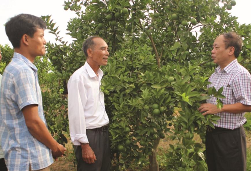 Mô hình vườn cây ăn trái có giá trị kinh tế cao tại huyện Bố Trạch.