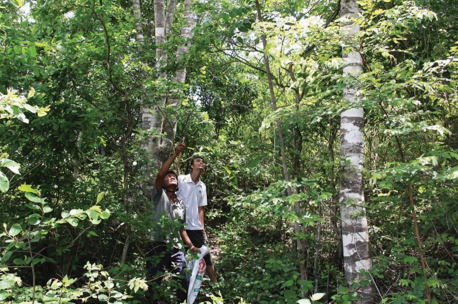 """Đồng bào nơi đây cho rằng, kiến phải lấy từ trong rừng về mới """"sạch"""" nên hầu hết người ta thường vào rừng bắt kiến."""